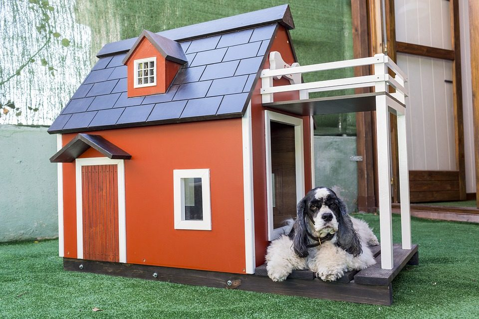 Indoor Dog House for Sale - Post Thumbnail